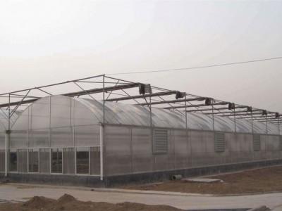 Multi-span shed work field of Shuozhou, Shanxi